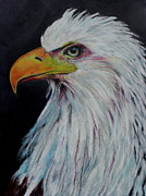 Eagle Eye Print by Jeanne Fischer