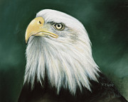 Bald Eagle Pastels Metal Prints - Eagle Eye Metal Print by Karen Cade