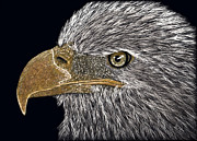 American Eagle Paintings - Eagle Eye by Lynn Kibbe