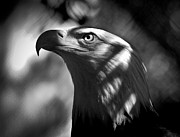 Raptor Prints - Eagle In Shadows Print by Robert Frederick