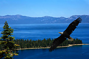 Randall Branham - Eagle Lake Tahoe