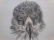 Lucy D Drawings Metal Prints - Eagle Metal Print by Lucy D