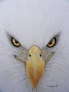 White River Pastels Prints - Eagle Print by Mary  By The Sea
