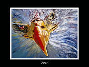 Patriotic Paintings - Eagle OoraH by Donna Proctor