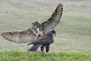 Hawk Pyrography - Eagle Owl Attack by Karl Wilson
