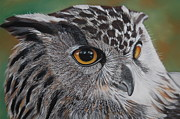 Owl Pastels - Eagle owl by David Bennett
