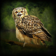 Roy Mcpeak Prints - Eagle Owl Print by Roy McPeak