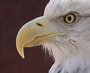 Eagle Framed Prints - Eagle Portrait Freehand Framed Print by Ernie Echols
