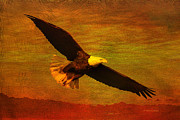 Mates Framed Prints - Eagle Spirit Framed Print by Deborah Benoit