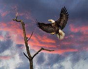 Mark Steven Perry - Eagle sunset landing