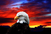 Eagle Digital Art Posters - Eagle Sunset Poster by Nick Gustafson