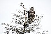 Roger Lewis Metal Prints - Eagle Watch Metal Print by Roger Lewis