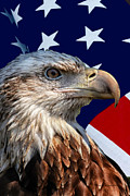 50 Stars Posters - Eagle With US American Flag Poster by Thomas Woolworth