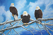 Laura Curtin - Eagles Warming in the Sun