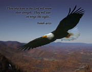 Soaring Painting Posters - Eagles Wings Poster by Shane Garrett