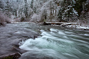 Eagle Creek Prints - Eagles Winter Print by Darren  White