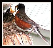 Gail Matthews - Early Bird gets the Worm