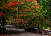 Arkansas Art - Early Fall At Talimena Park by Robert Frederick