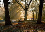 Park Benches Photos - Early Morning at the Park by Iris Greenwell