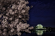 Reflections In River Prints - Early morning Cherry Blossoms at the Tidal Basin Washington DC 01 Print by Mark Serfass