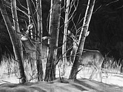 Wildlife Drawings Drawings Prints - Early Morning Does Print by Aaron Spong