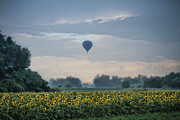 Balloon Flower Framed Prints - Early Morning Flight Framed Print by Beverly Everson