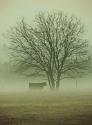 Robert ONeil - Early Morning Fog 010