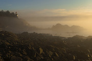 Lubec Prints - Early morning fog at Quoddy Print by Marty Saccone