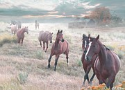 Horses Digital Art - Early Morning Fog by Bill Stephens