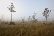 Slash Photos - Early morning fog Landscape by Rudy Umans