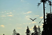 Rich Rauenzahn - Early Morning Heron in...