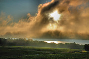Finger Lakes Prints - Early Morning Vineyard Print by Steven Ainsworth