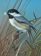 Black-capped Chickadee Greeting Cards Prints - Early Preparations Print by Mike Brown