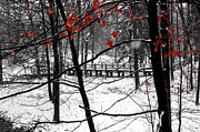 Indiana Landscapes Photo Prints - Early Snow Print by Bob Phillips