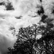 Diptych Photos - Early Spring Treetops 1 of 2 by Hakon Soreide
