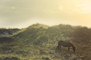 Glass Eyed Pony Photography Posters - Early Surise Dune Graze Poster by Lyndsey Warren
