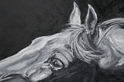 Black And White Horse Framed Prints - Earnest Eyes - Detail Framed Print by Renee Forth Fukumoto