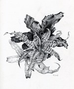 Cryptanthus Drawings - Earth Stars by Penrith Goff