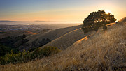 East Bay Prints - East Bay Hills in Summer Print by Matt Tilghman