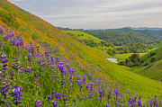 Marc Crumpler - East Bay Wildflowers