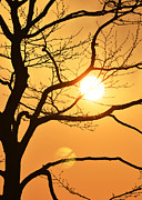 Long Island New York Prints - East End Sunset Tree Print by Anahi DeCanio