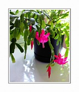 Easter Cactus Art Posters - Easter Cactus in the Sun 2 Poster by Barbara Griffin