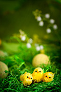 Adorable Digital Art Prints - Easter chicks Print by Mythja  Photography