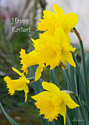 Diana Haronis Prints - Easter Daffodils Print by Diana Haronis