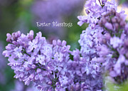 Diana Haronis Prints - Easter Lilacs Print by Diana Haronis