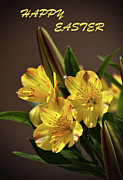Easter Lilies Print by Sandi OReilly