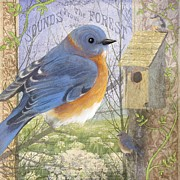 Sharon Marcella Marston - Eastern Bluebird
