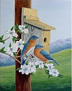 Fran Brooks - Eastern Bluebirds