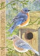 Sharon Marcella Marston - Eastern Bluebirds