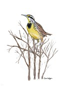 Meadowlark Originals - Eastern Meadowlark by Carol Veiga